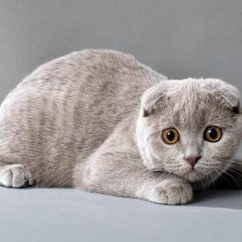 Как давать коту супрастин