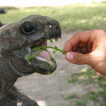 Сколько лет живут домашние черепахи водные в домашних условиях