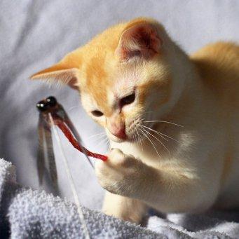 Игрушки для котят своим руками фото 919