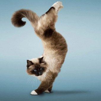 как правильно знакомить кошку с котенком