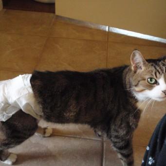 памперсы для кошек фото