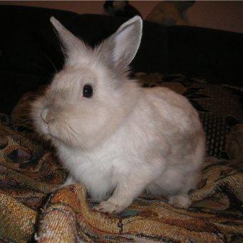 Почиму кролик лижет тело