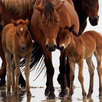 Беременность лошади