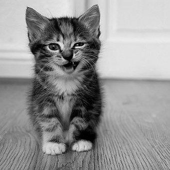 Если кот чихает что надо делать
