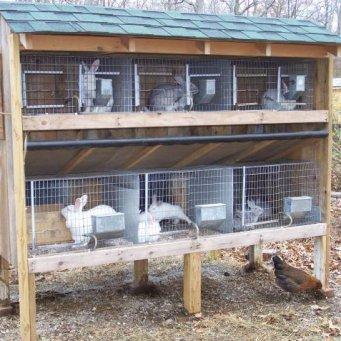 Зимняя клетка для кроликов своим руками