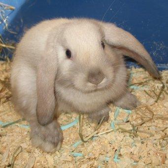 Разведение уход за кроликами в домашних условиях 89