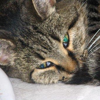 Токсоплазмоз у кошек способы лечения