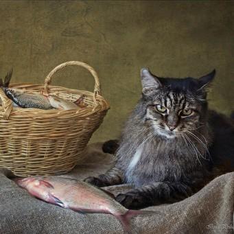 Чем кормить кота для набора веса
