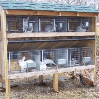 Клетка для кроликов своими руками фото чертежи