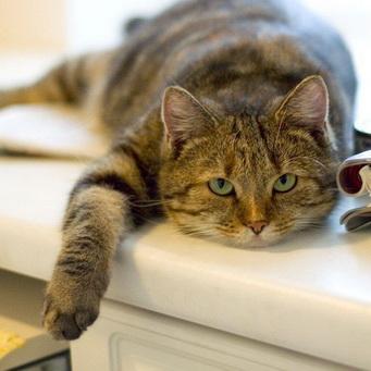Кошачьи клички, клички котов, кличка кошки, как назвать