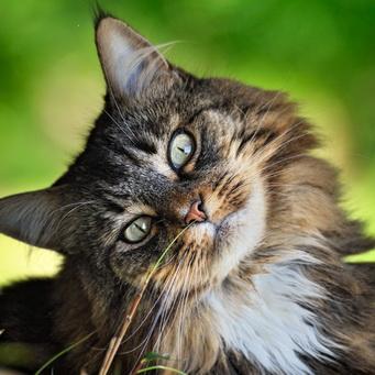 Имена и клички для кошки, девочки Имя для кошечки с