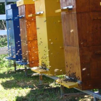 разведение пчел в лежаках видео