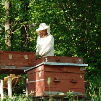 Как сделать улик для пчел своими руками