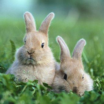 особенности пищеварения кроликов