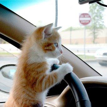 Как отпугнуть кота от машины