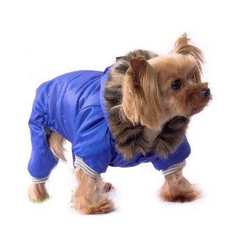 Одежда зимняя для йорки фото