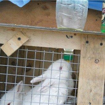 Как своими руками сделать поилки для кроликов