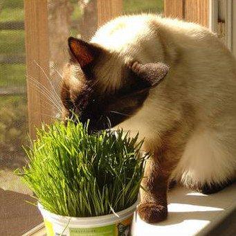 Десять лучших беззерновых сухих кормов для кошек