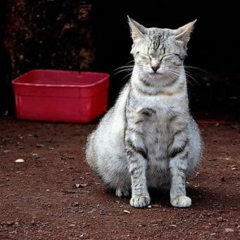 Может ли кошка не родить всех котят