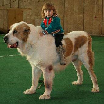 Дома для собаки своими руками