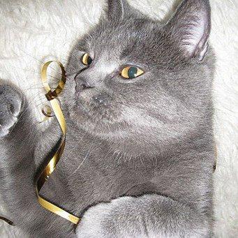 Почему очень сильно линяет кошка что делать