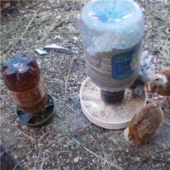 Поильник для цыплят своими руками из пластиковой бутылки