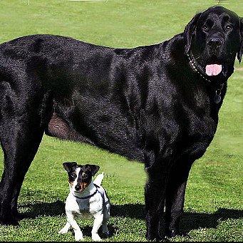 Таблица веса и роста собак