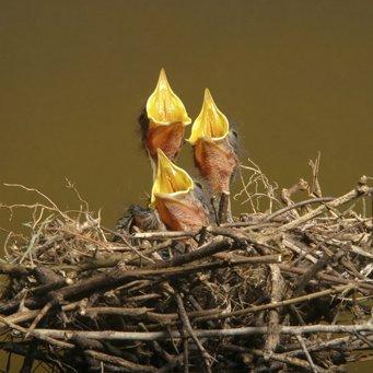Гнездо аистов своими руками