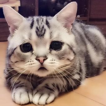 Моча у кота пена