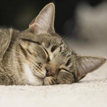 Кот ничего не ест и всё время спит