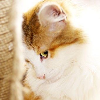 Выкройки игрушек: коты - примитивы