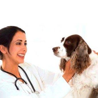 Лечение демодекоза у собак препараты адвокат