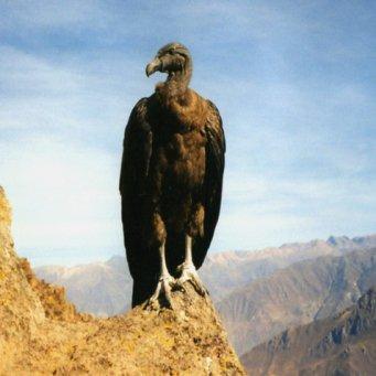 птенцы хищных птиц фото и названия