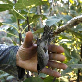 Силки для птиц своими руками