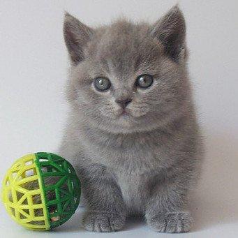 Как котенку сделать родословную 823