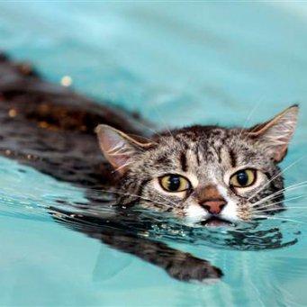 Что делать вода попала коту в ухо