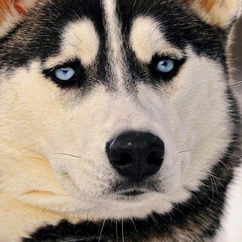 исправление прикуса собаки: