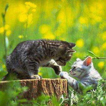 как познакомить кошку с кроликом