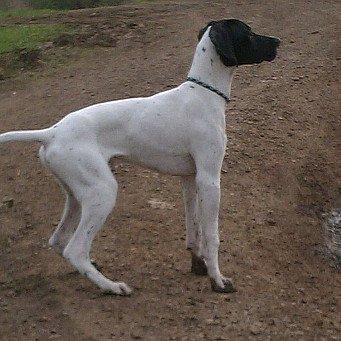 Геморрой у собак симптомы как лечить и что делать