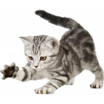 Что делать, как отучить кошку царапать обои?