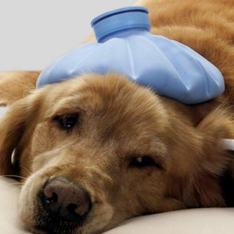 Народное средство лечения ушных клещей у кошек