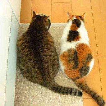что делать при знакомстве кошек