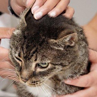 Коты и кошки своими руками
