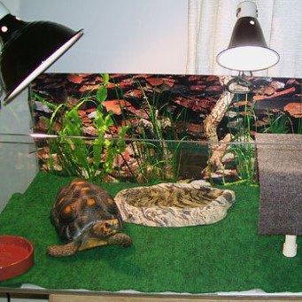 Как сделать террариум сухопутной черепахи своими руками 936