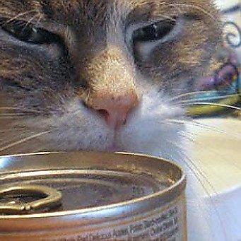 Чем и когда можно кормить кота после кастрации
