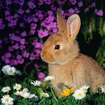 Ядовитые травы для кроликов