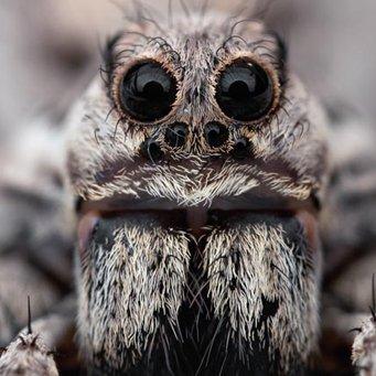 как ухаживать за тарантулом