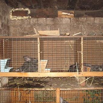Кролики клетка маточник