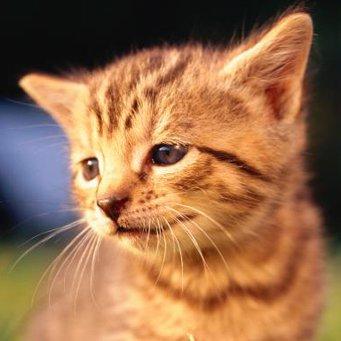 запах рыбы изо рта кошки