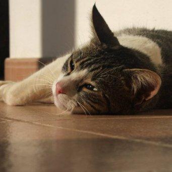 Если кот после еды рыгает